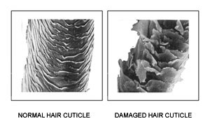hair_cuticle